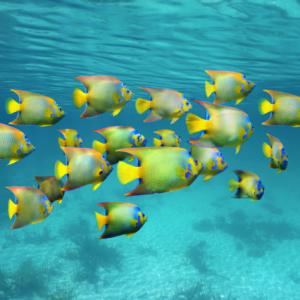 poissons colorés dans la mer des caraïbes