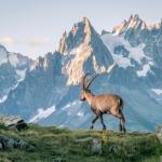 montagne et nature